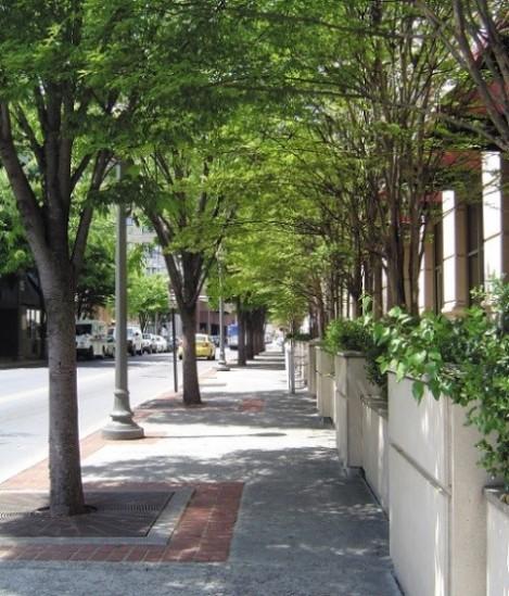 Street Trees 1