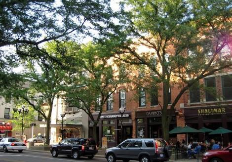 Street Trees 2