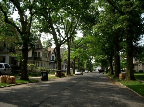 Street Trees 3